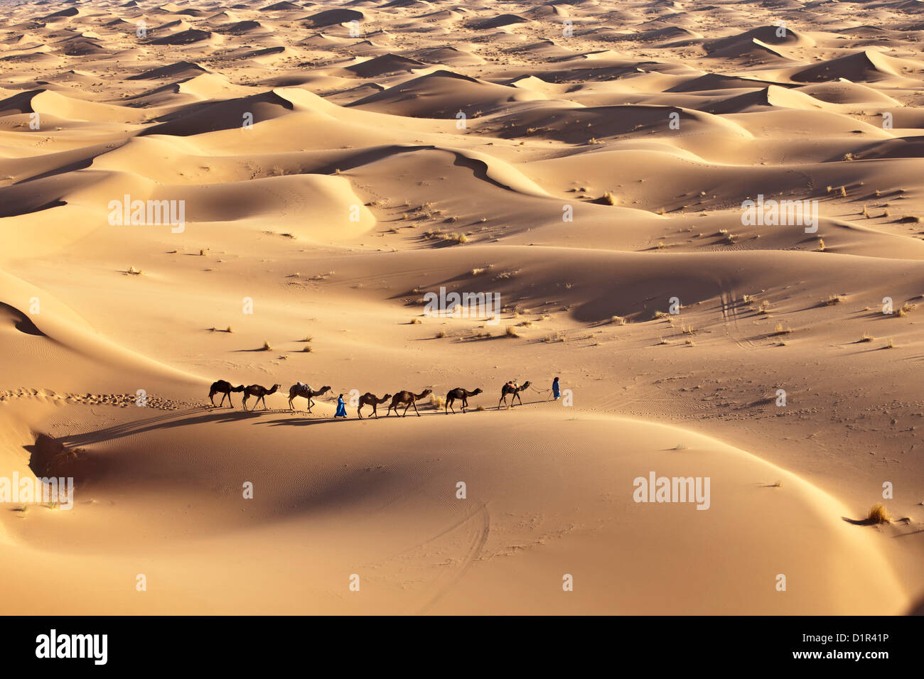 Marruecos, M'Hamid, Erg Chigaga dunas de arena. El desierto del Sahara. Conductores de camellos y la caravana Imagen De Stock