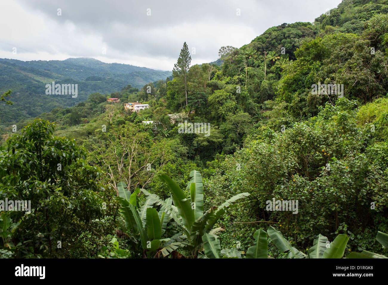 ADJUNTAS, PUERTO RICO - Casas en las montañas. Imagen De Stock