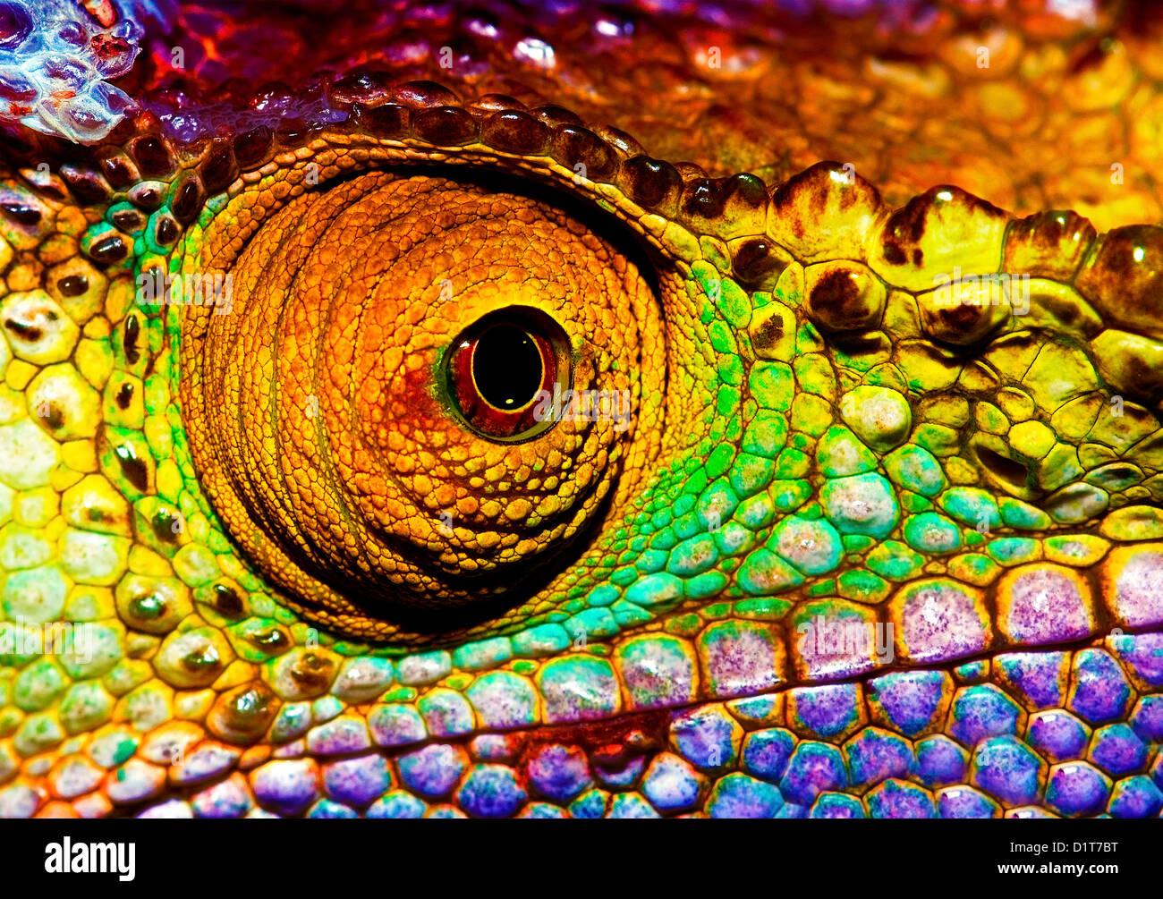Foto de coloridos ojos reptilianos, closeup jefe parte de camaleón, piel escamosa multicolor de lagarto, animales Foto de stock