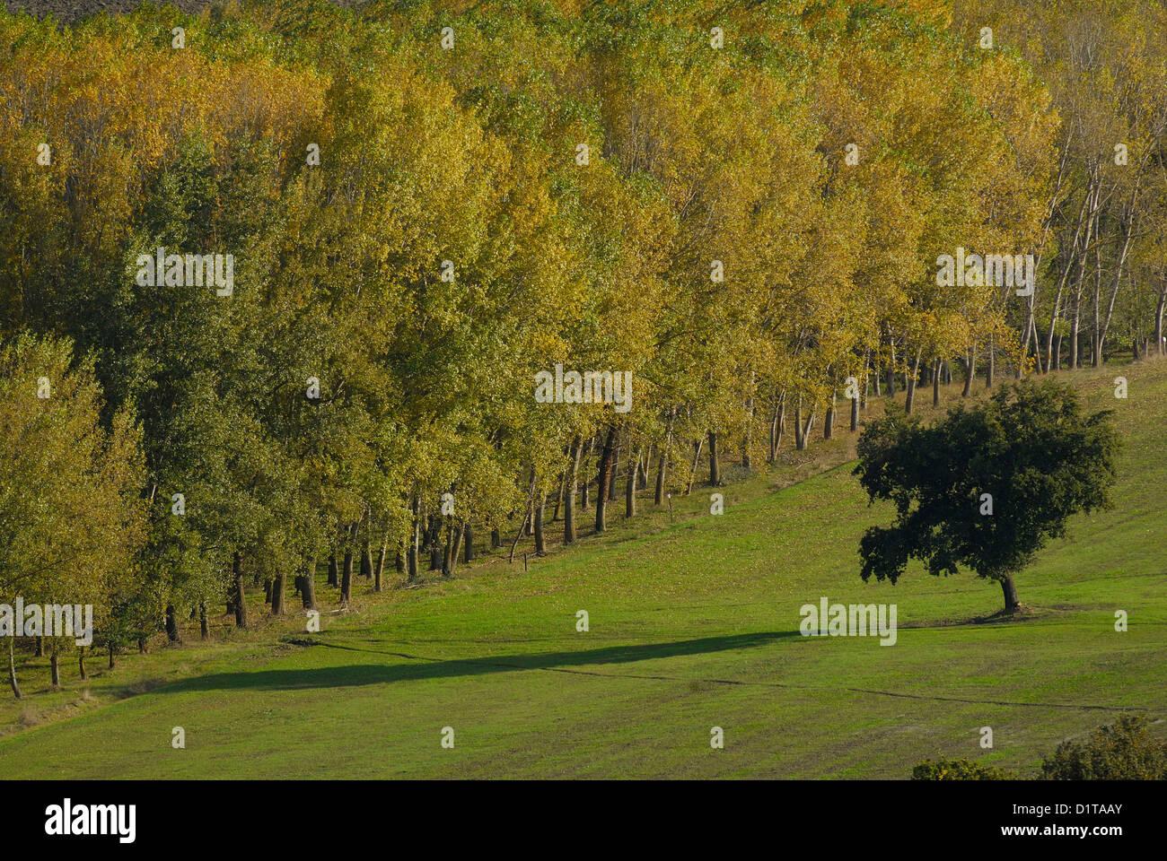 Desde San Quirico d'Orcia, Val d'Orcia, paisajes, Siena, Toscana, Italia Imagen De Stock
