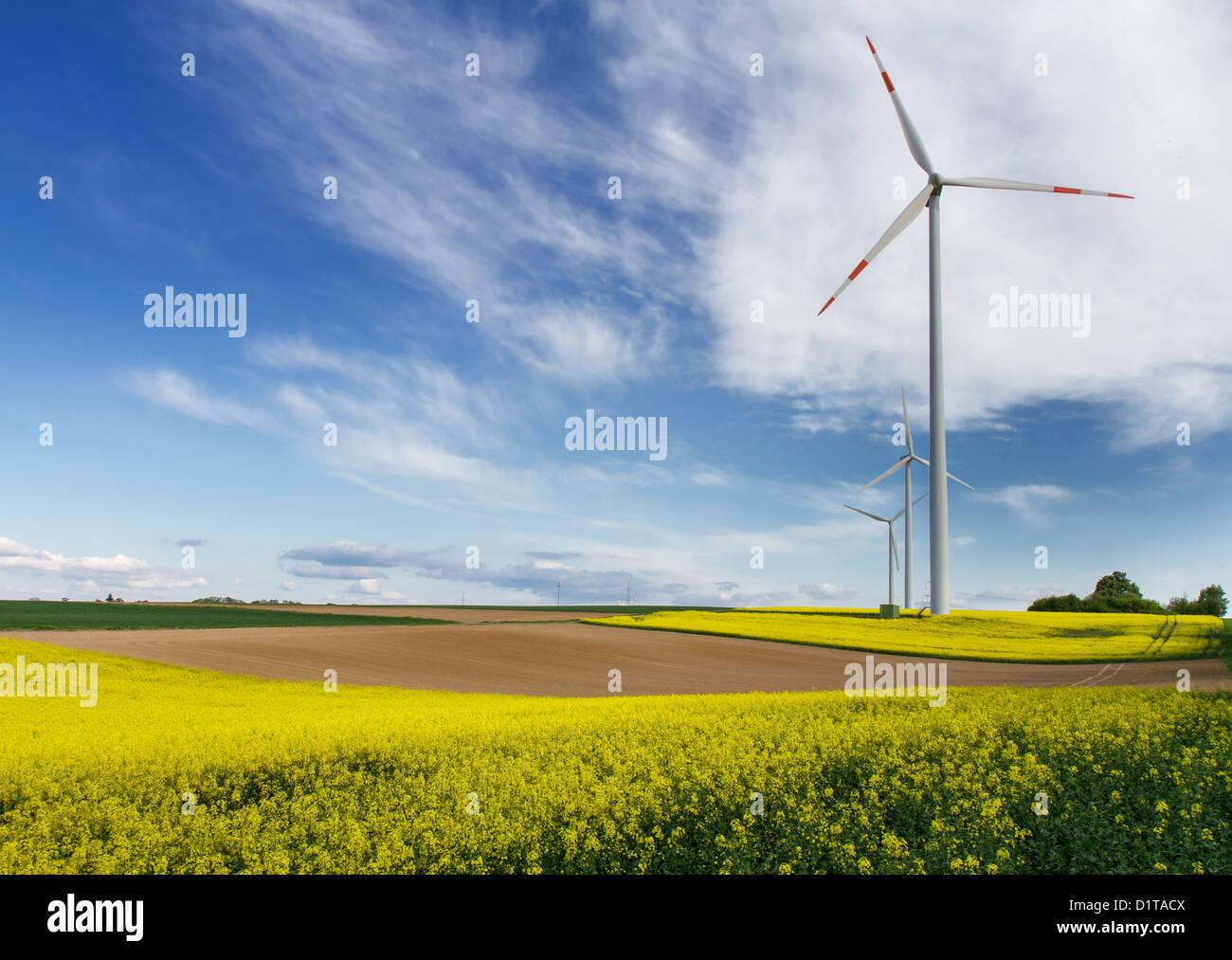 Energías Renovables - campos de canola y molinos de viento Imagen De Stock