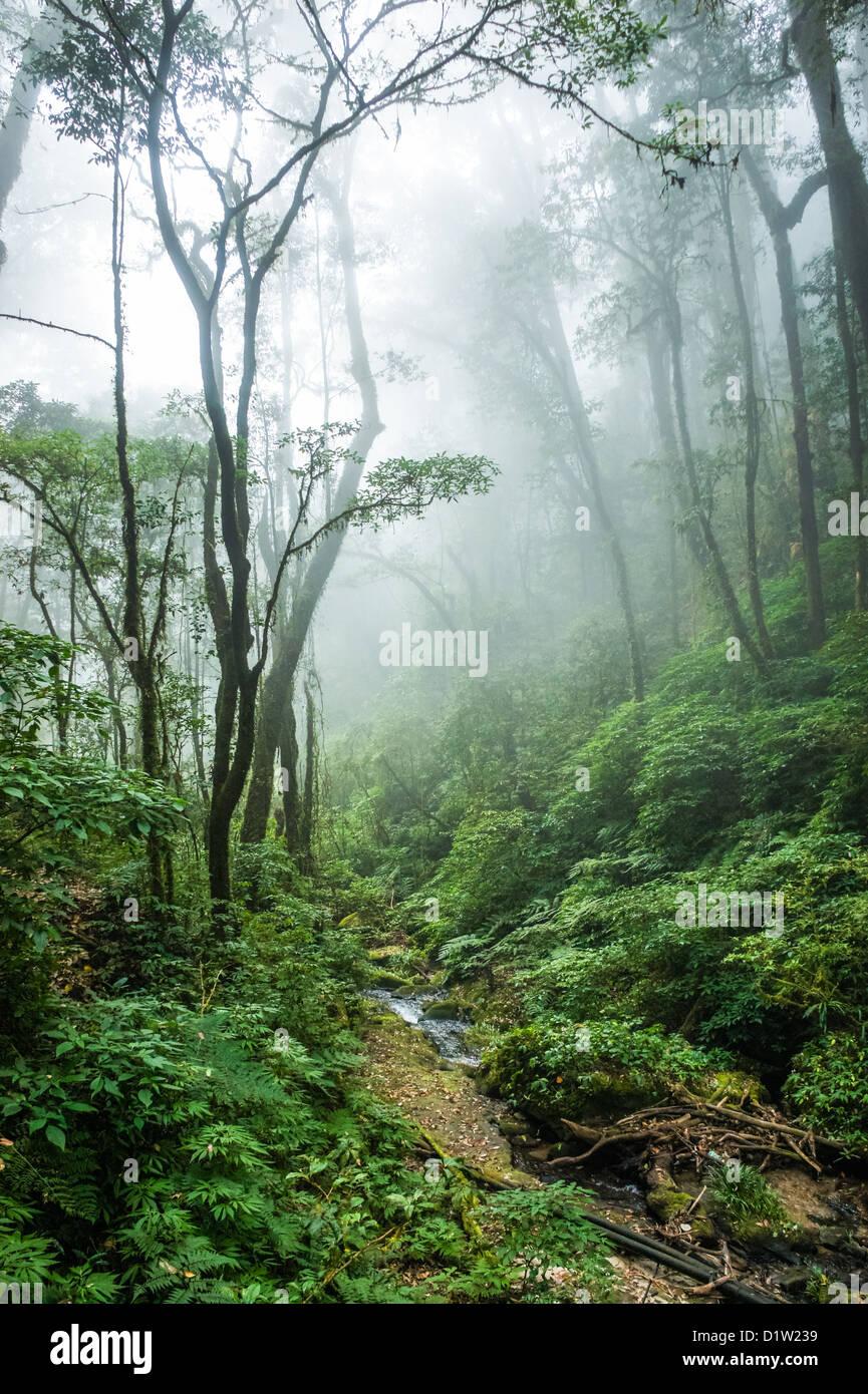 El bello escenario de bosque tropical en el Parque Nacional Doi Inthanon, Tailandia. Foto de stock