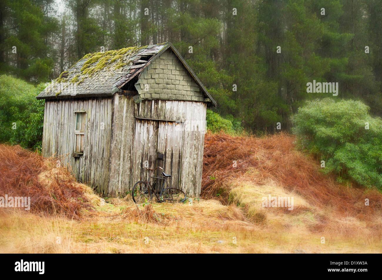 Una vieja bicicleta derramó / shack cayendo en el bosque de pinos en glencoe Escocia Foto de stock