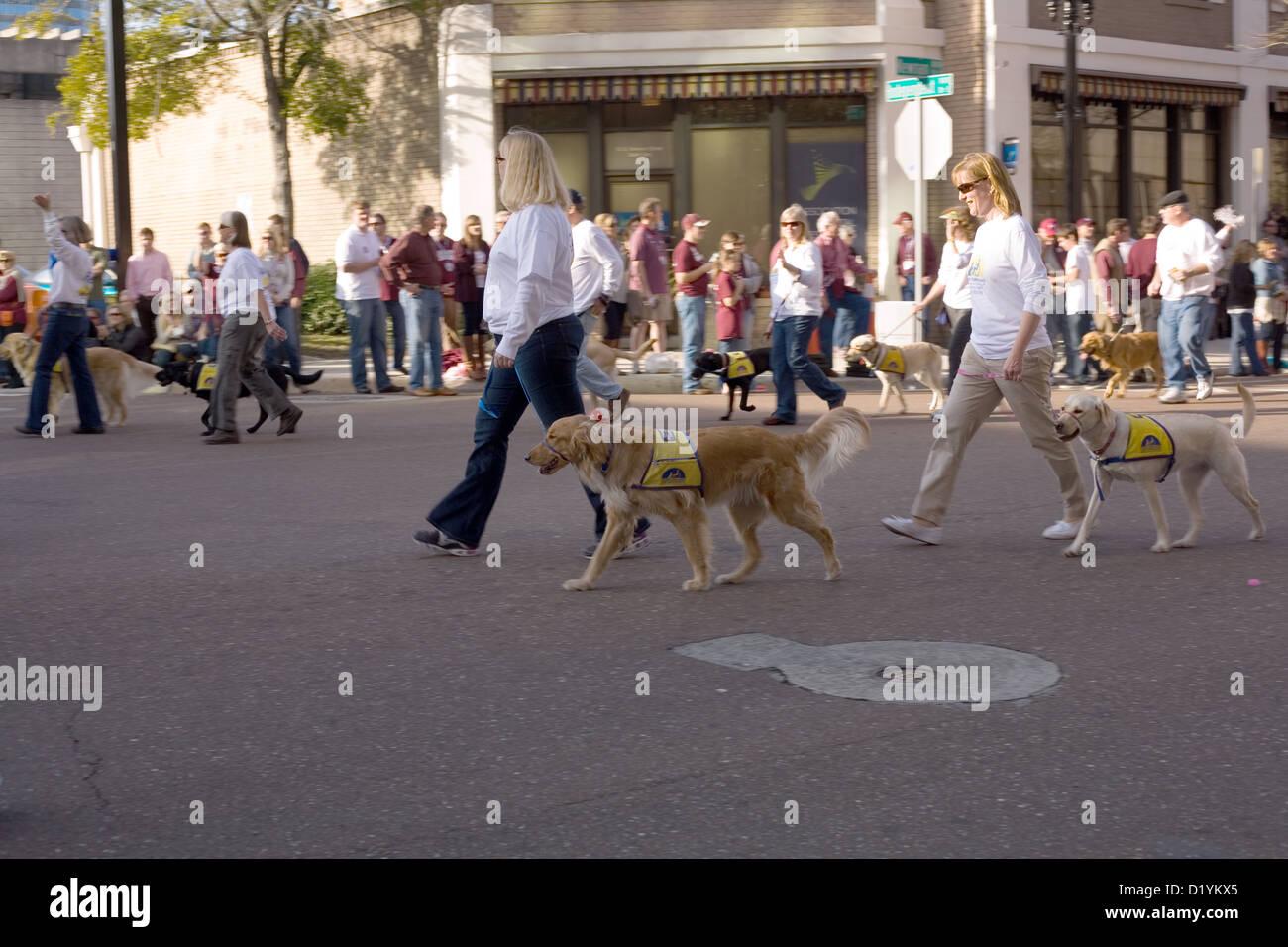 Los acompañantes caninos por la independencia en el año 2013 Gator Bowl Parade en Jacksonville, Florida Imagen De Stock