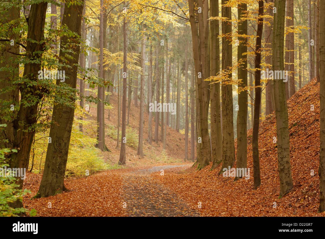 Woodland track at Hruboskalsko, Cesky raj, Bohemia Oriental, República Checa. Imagen De Stock