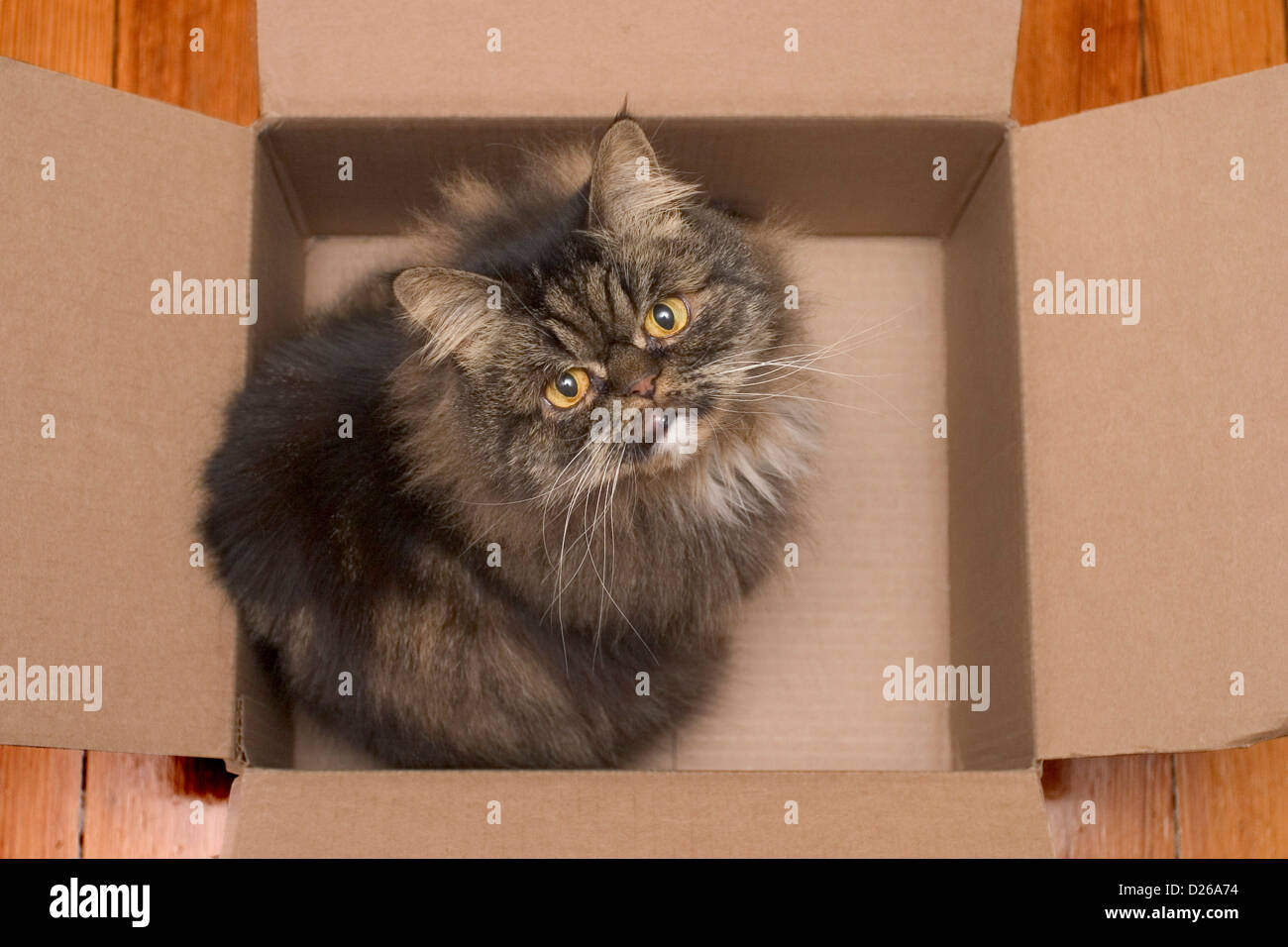 Gato en una caja Foto de stock
