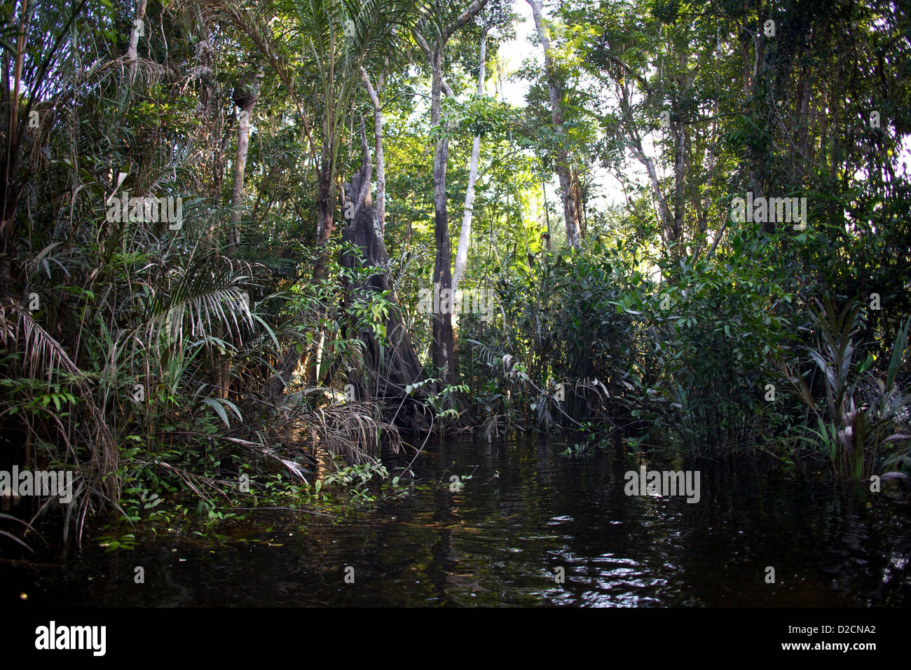 La selva amazónica desplazando hasta el borde del agua. Imagen De Stock