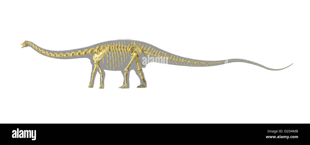 El Diplodocus dinosaurio gigante esqueleto dinosaurio herbívoro que ...