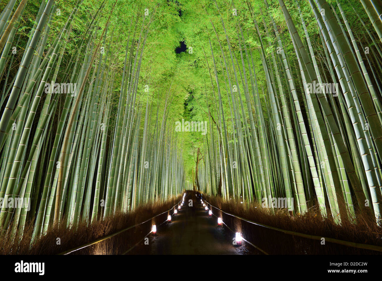 El bosque de bambú de Kyoto, Japón. Imagen De Stock