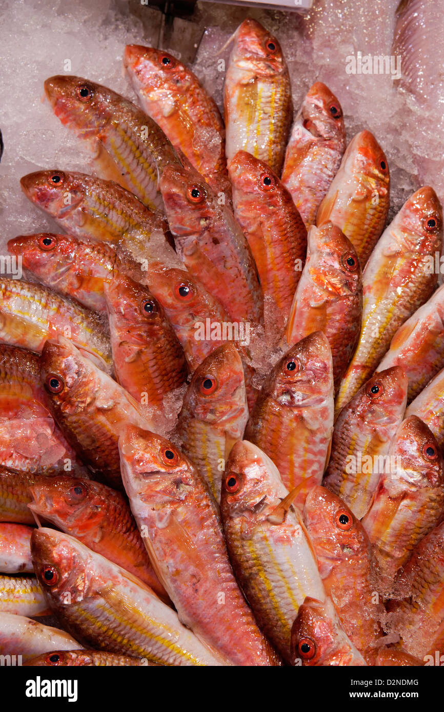 Mercado de Pescado salmonete de fango Salmonete chamberi Madrid España marisco fresco hielo Imagen De Stock