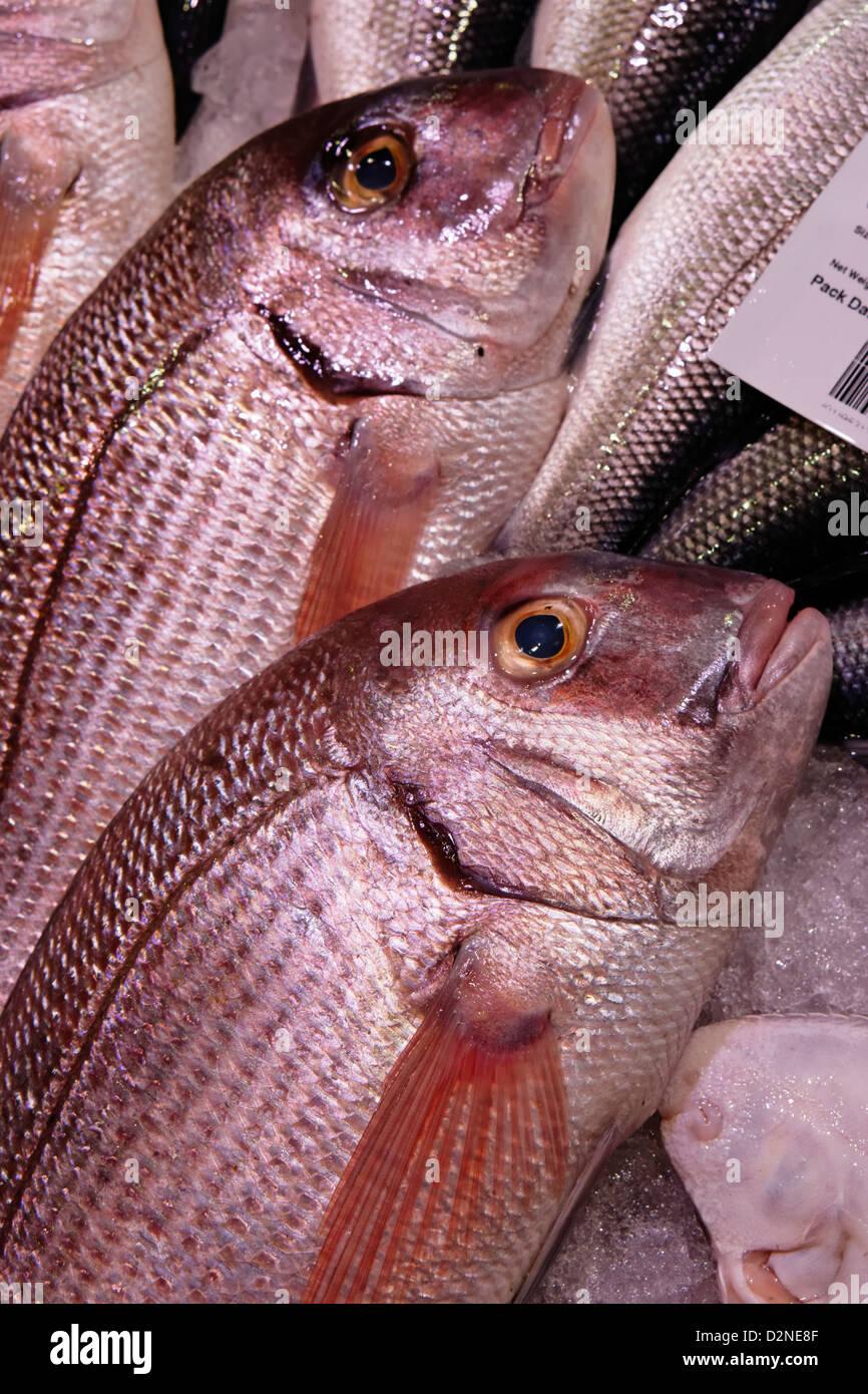 Porgy Pargo Pargo fish market chamberi Madrid España mar fresco Imagen De Stock