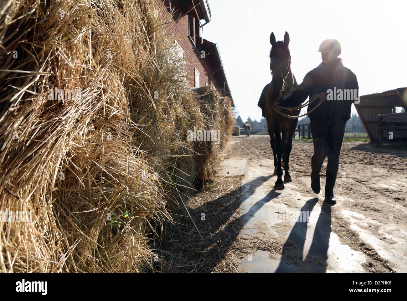 Neuenhagen, Alemania, lleva a su jinete pasa un montón de paja Imagen De Stock