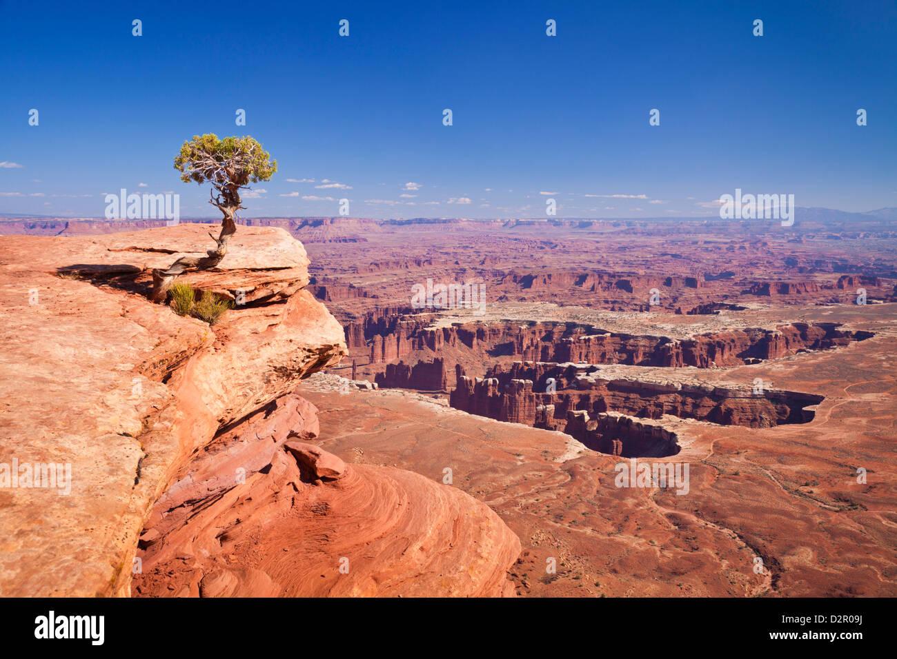 Grand View Point vistas y enebro, árbol de la isla en el cielo, el Parque Nacional Canyonlands, en Utah, EE.UU. Imagen De Stock