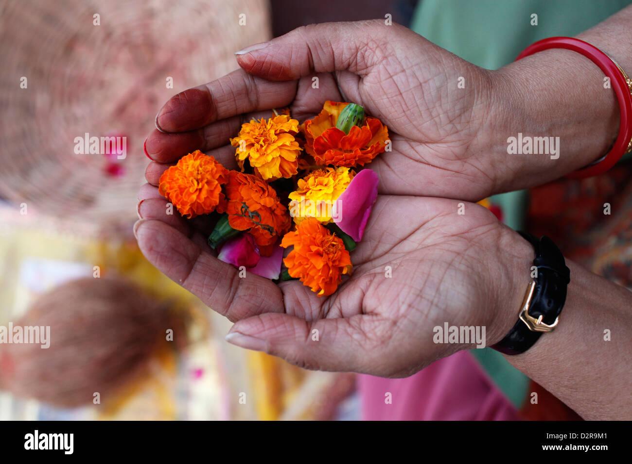 La ofrenda de flores durante la oración hindú, Mathura, en Uttar Pradesh, India, Asia Foto de stock
