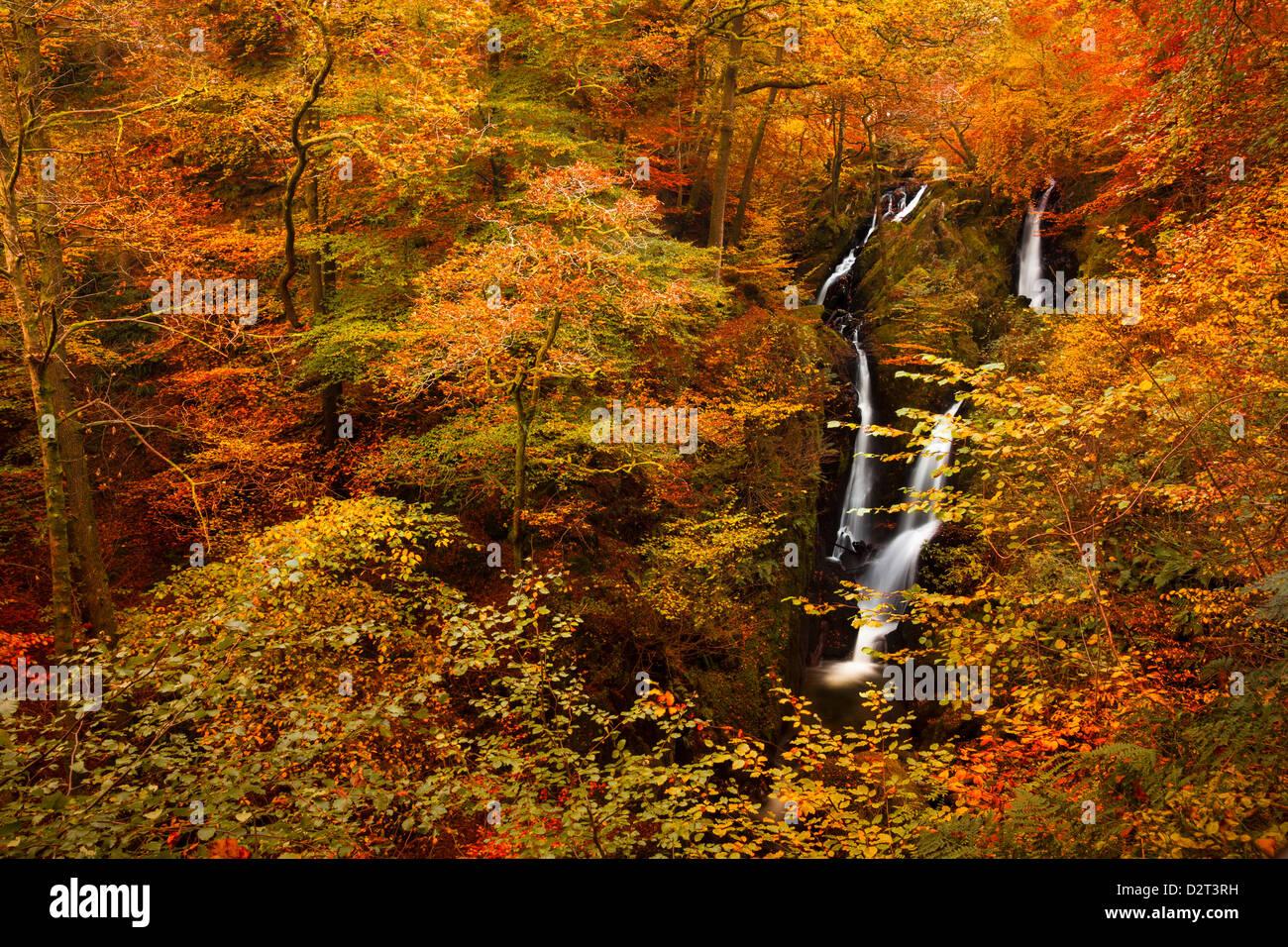 Stock fuerza Ghyll Cascada en el otoño, el Lake District National Park, Cumbria, Inglaterra, Reino Unido, Europa Imagen De Stock