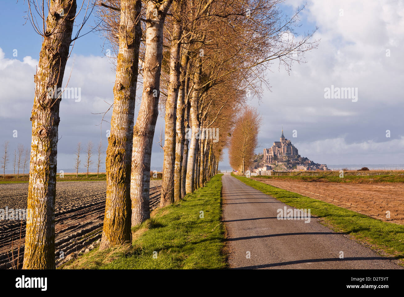 Una avenida arbolada conduce hacia Mont Saint Michel, Patrimonio Mundial de la UNESCO, Normandía, Francia, Europa Foto de stock