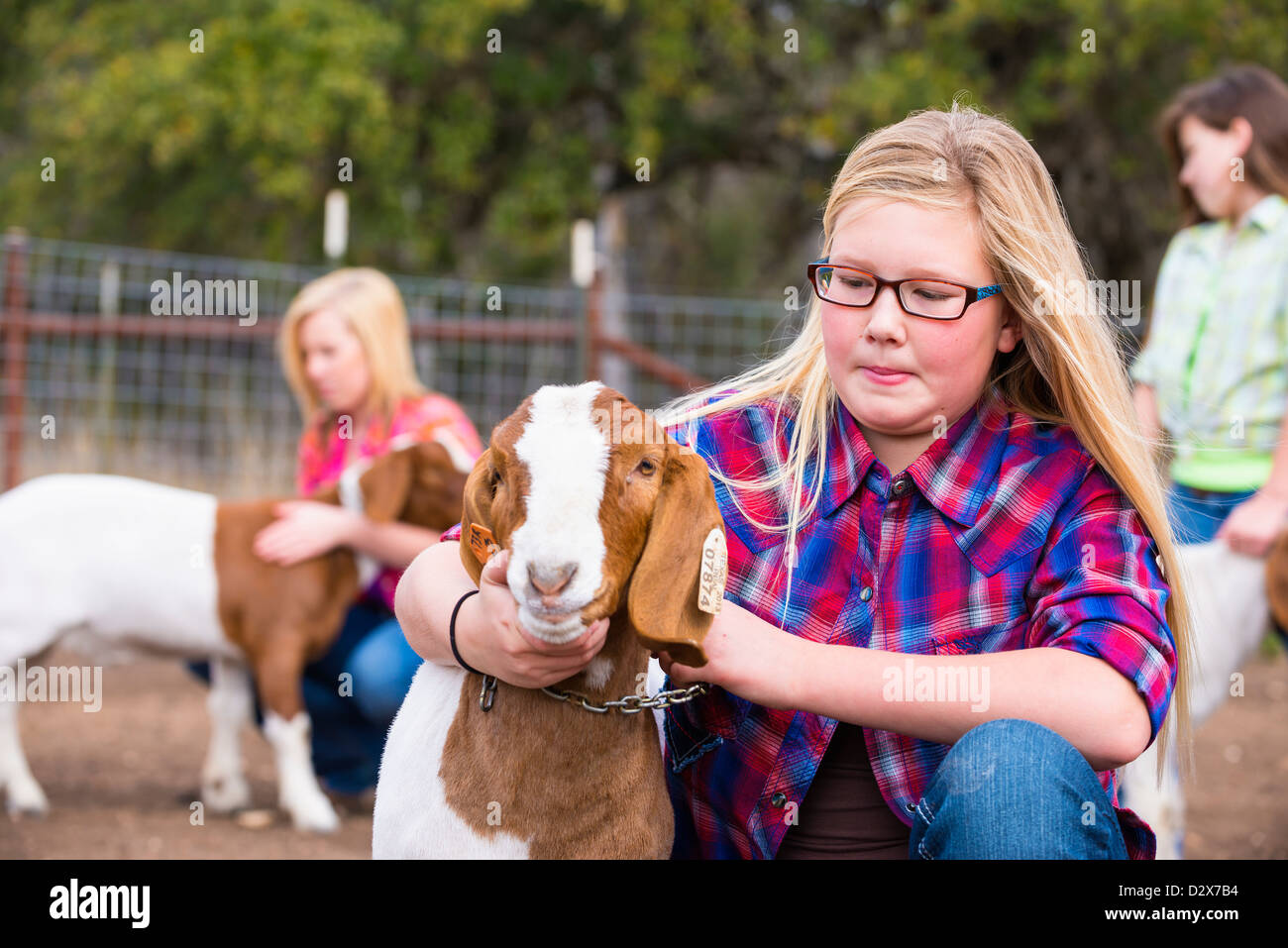 Finca las niñas teniendo cuidado de ganado caprino, acariciar y asearse para un stock show Imagen De Stock
