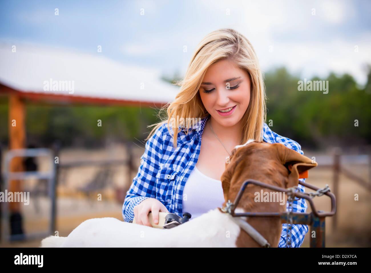 Trabajos agrícolas - joven mujer preparando cabra para stock show Imagen De Stock