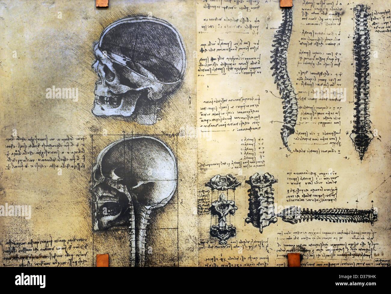 Da Vinci Anatomy Imágenes De Stock & Da Vinci Anatomy Fotos De Stock ...