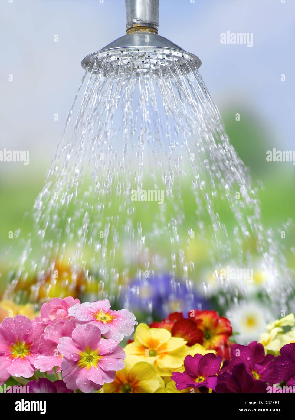 Regar las flores Imagen De Stock