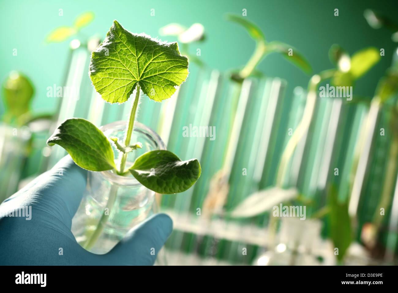 Mano a mano sosteniendo un tubo de ensayo con la planta Imagen De Stock