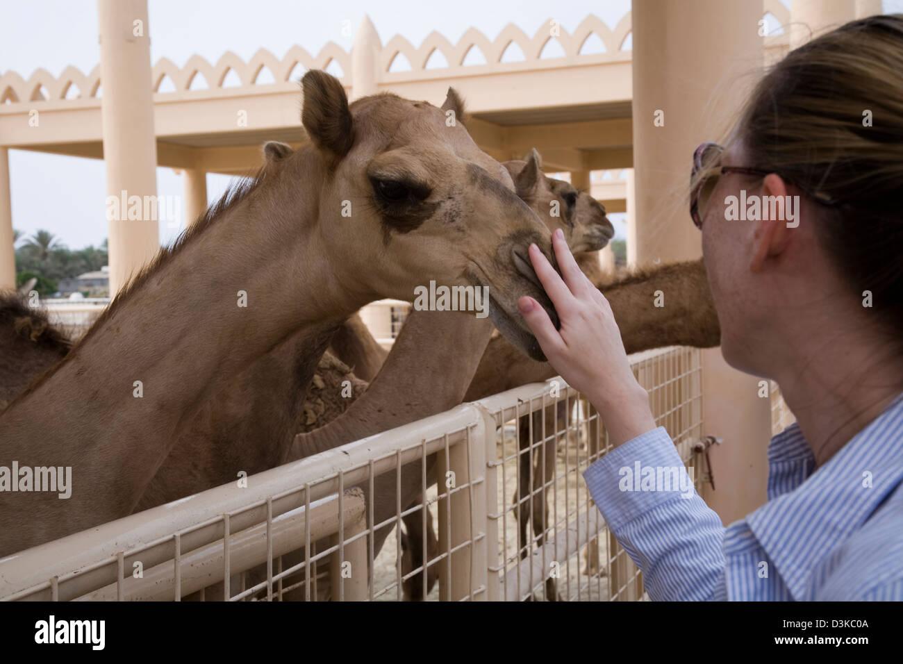 Al-Khalifa establos están abiertas al público y a los jóvenes en particular los camellos, realmente Imagen De Stock