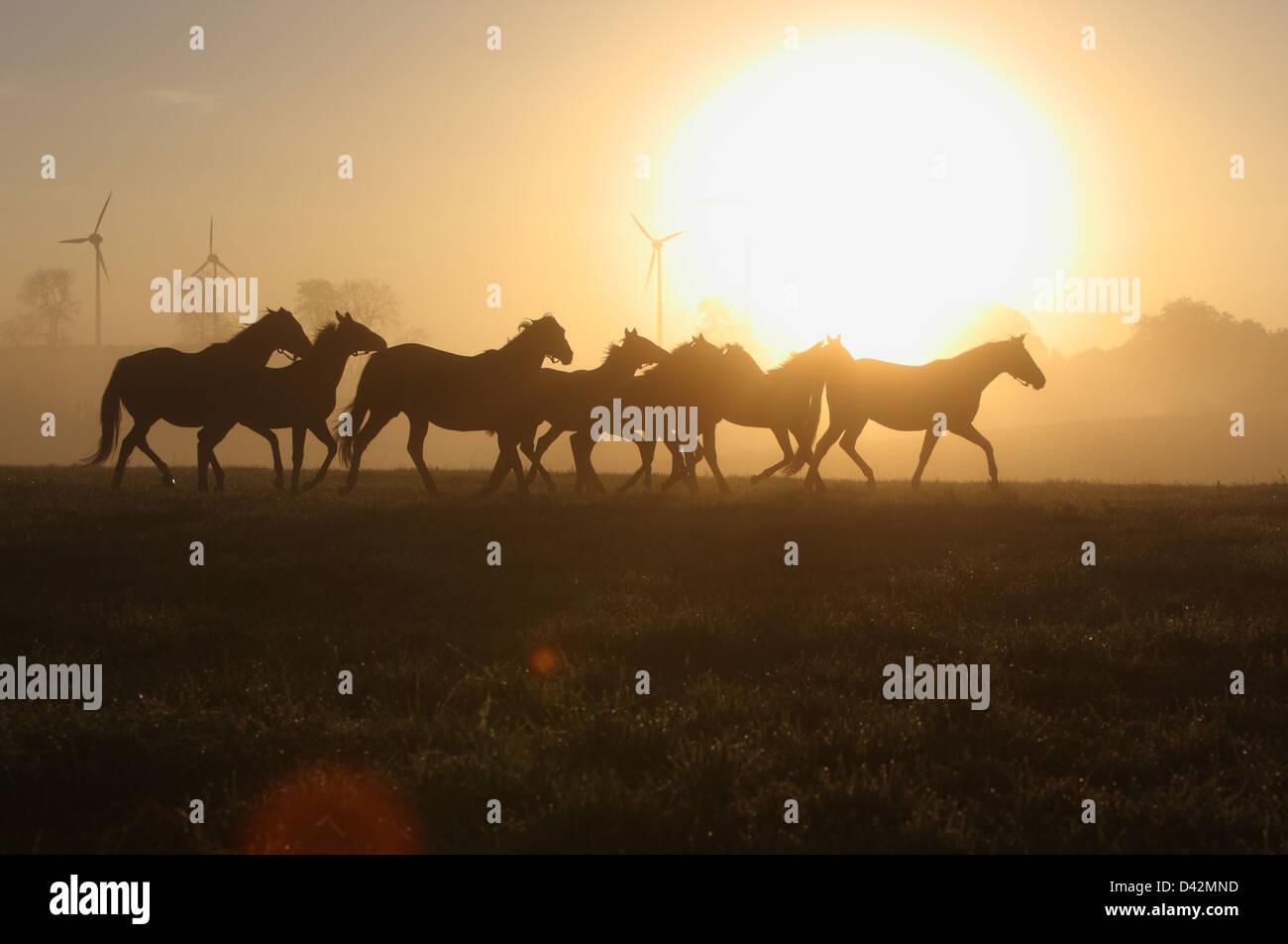 Görlsdorf, Alemania, siluetas de caballos al trote al amanecer. Imagen De Stock