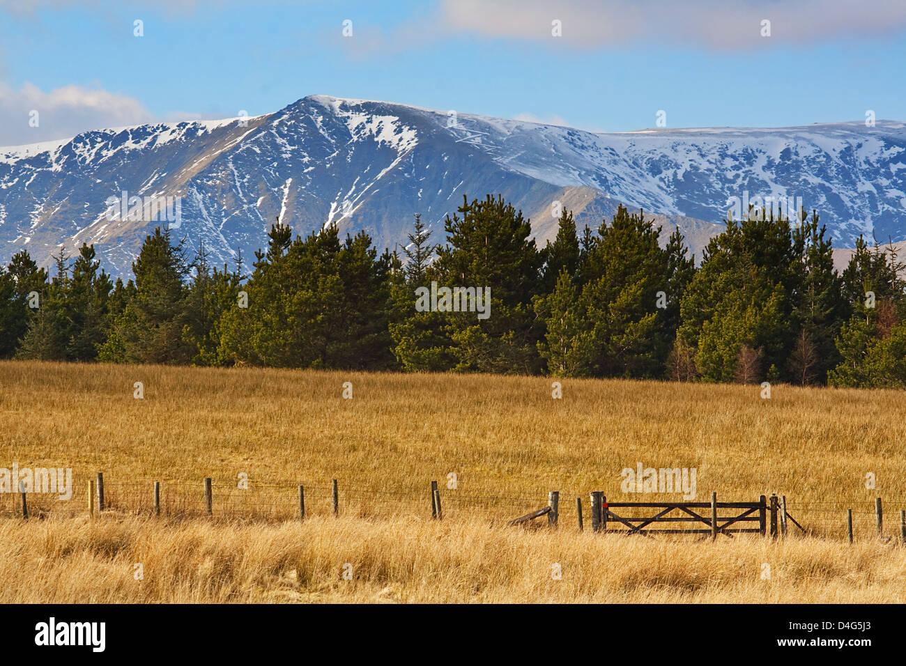 Nevadas montañas rocosas detrás de los árboles de pieles con campo o prairie delante Imagen De Stock