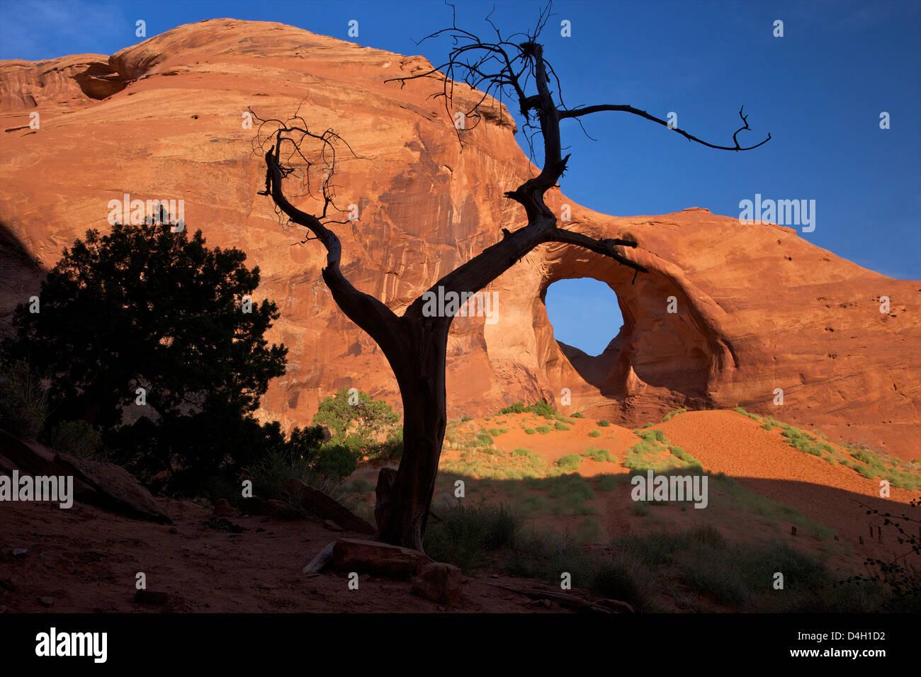 Juniper marcos árbol muerto oído del viento Arco, Monument Valley Navajo Tribal Park, Utah, EE.UU. Imagen De Stock