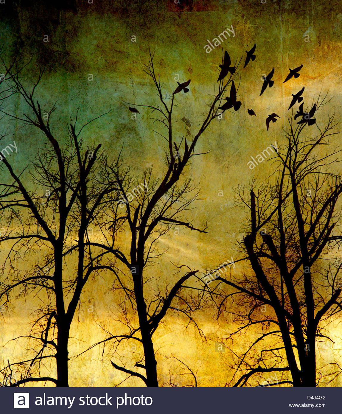 Spooky atmosférica bosque con ramas desnudas Imagen De Stock