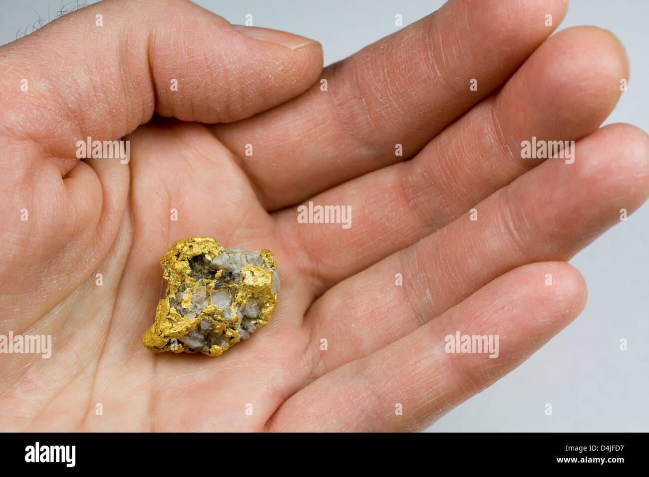 Oro Nevada EE.UU/Cuarzo Nugget en mano Foto de stock