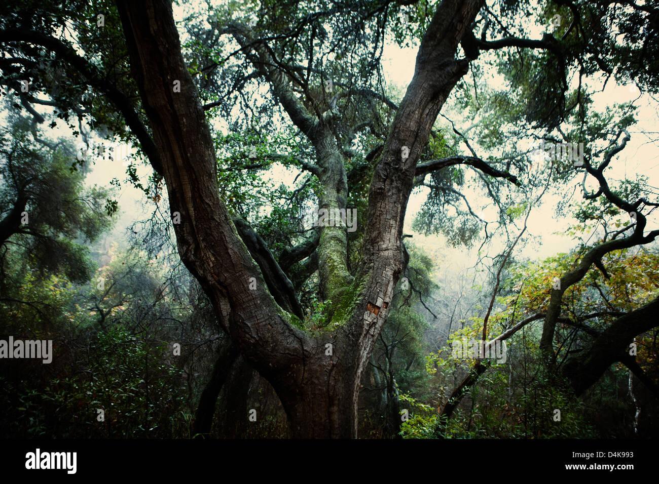 Árbol que crece en los bosques de musgo Imagen De Stock