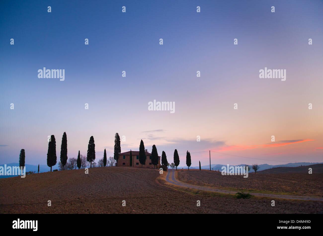 Cipreses toscanos crece sobre una colina Imagen De Stock