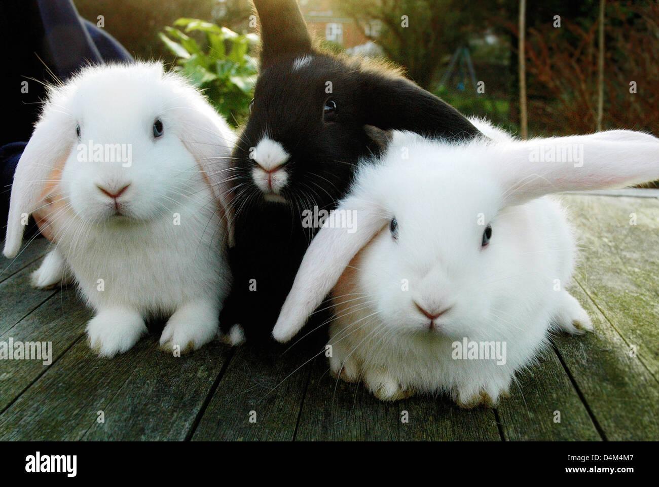 Los conejos sentada sobre una plataforma de madera Imagen De Stock
