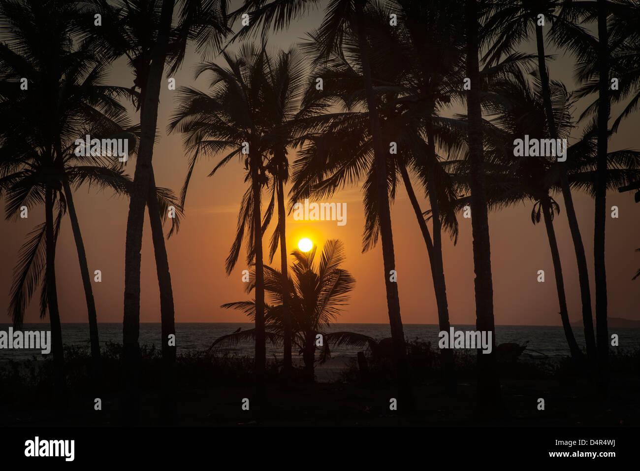 Atardecer en la playa Arossim, en el sur de Goa, India. Siluetas de palmeras. Imagen De Stock