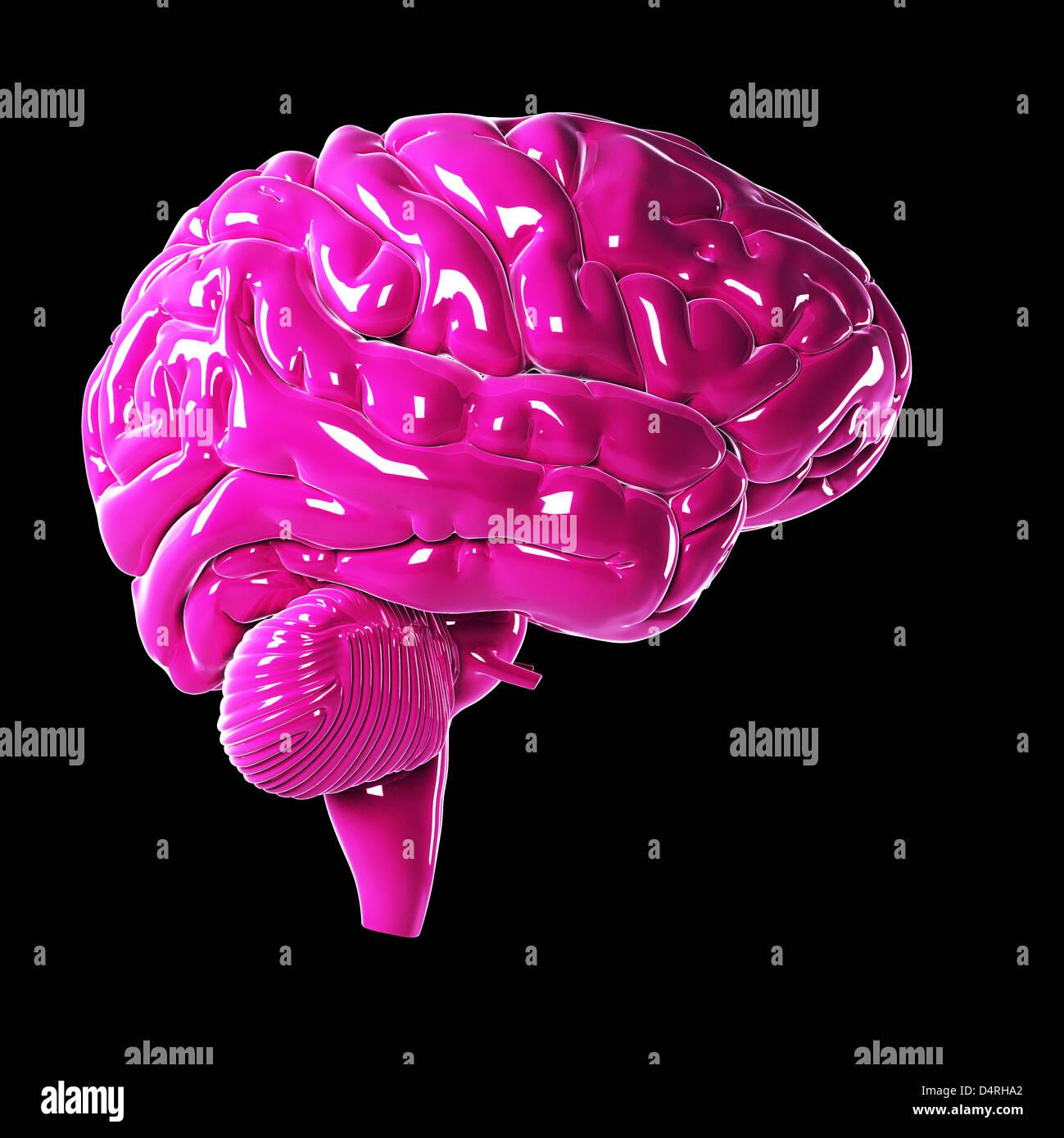 Rosa Brillante cerebro Imagen De Stock