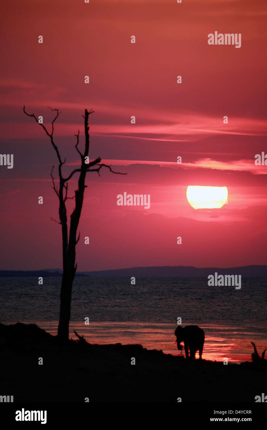 Zimbabwe, Bumi Hills. El sol se pone como un elefante solitario vigila desde la orilla del lago Kariba. Imagen De Stock
