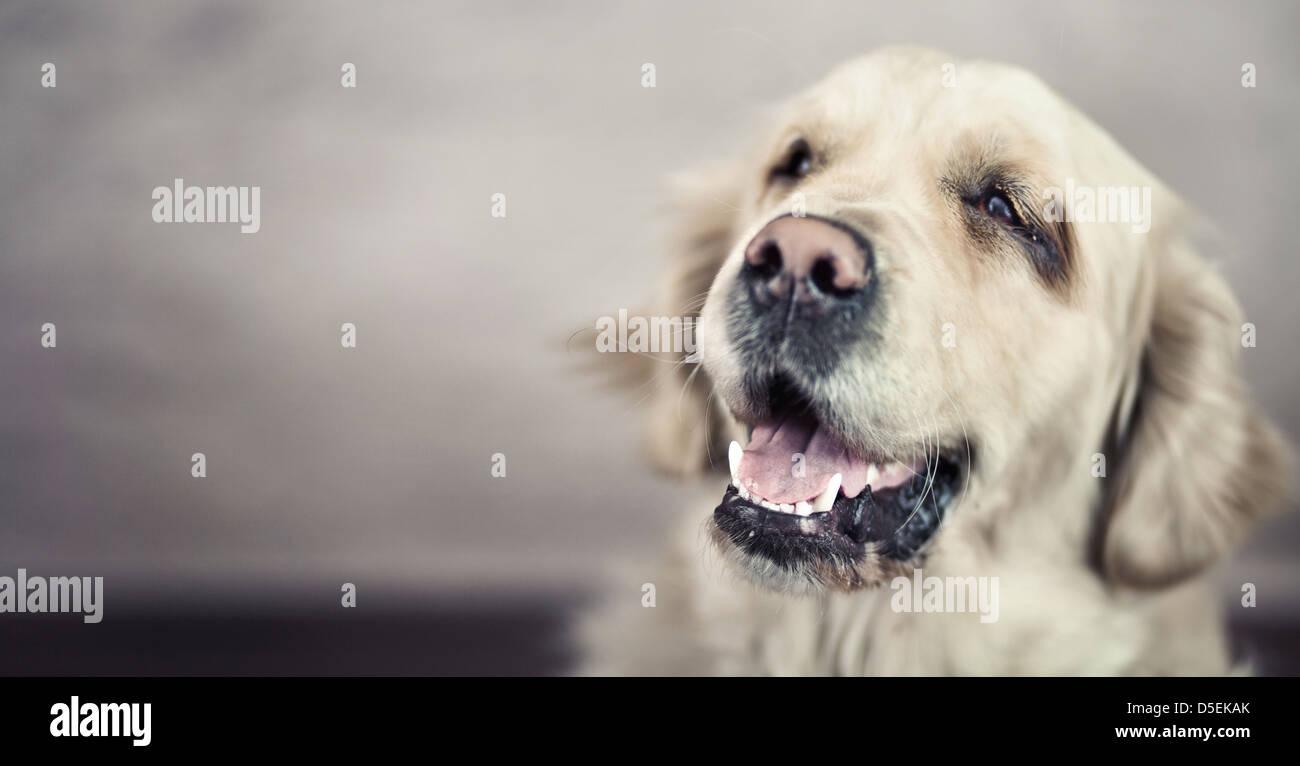 Presentando la imagen agradable y simpático pet Imagen De Stock