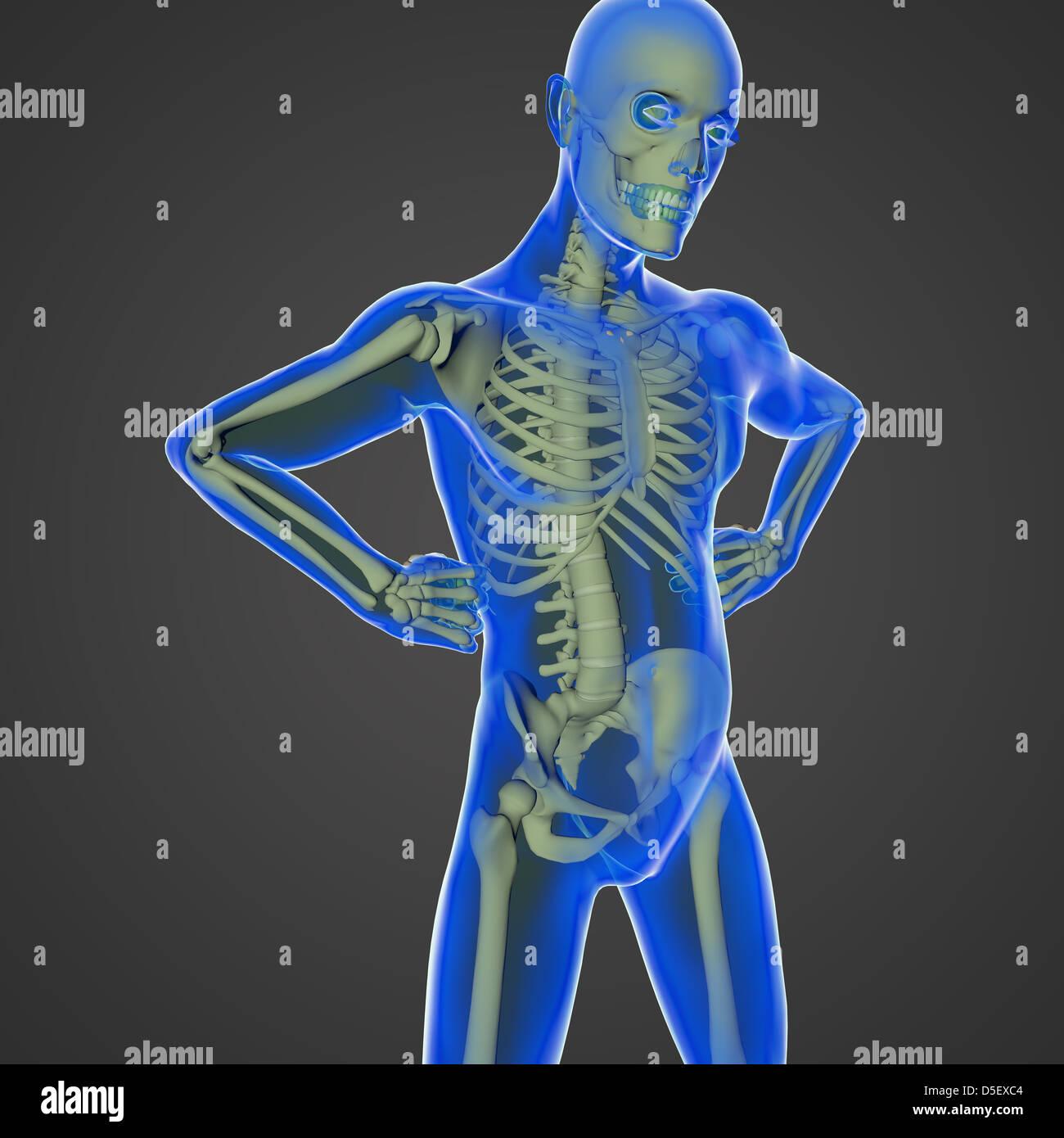 El cuerpo humano es una maravilla de la naturaleza con todos los ...