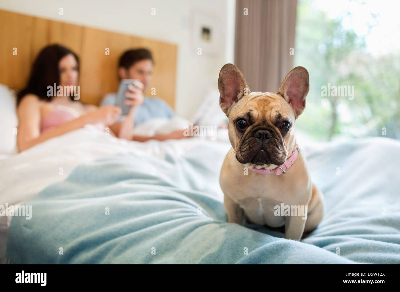 Perro sentado en la cama con la pareja Foto de stock