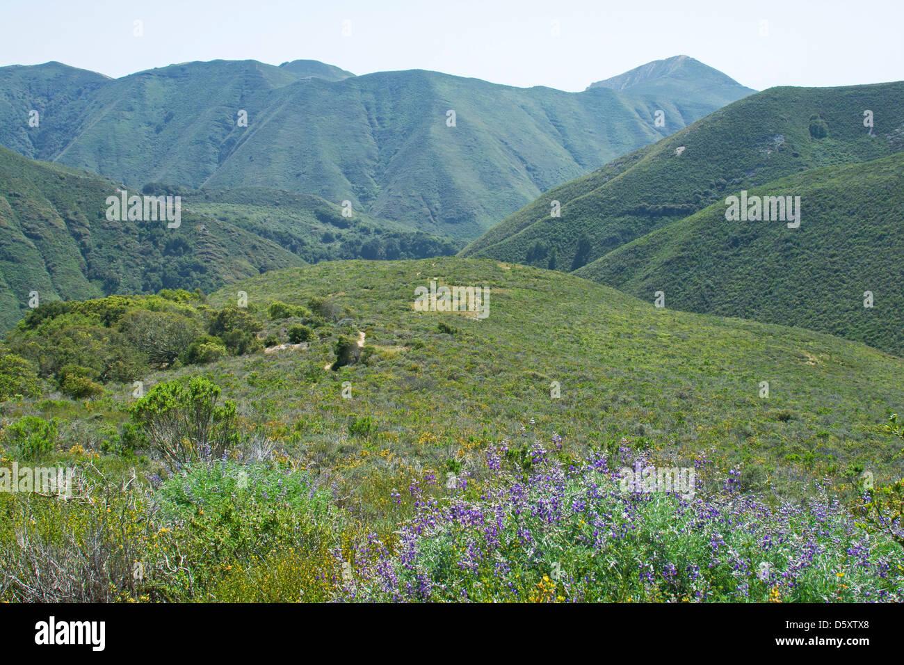 La montaña de Oro State Park, San Luis Obispo, California, EE.UU. Imagen De Stock