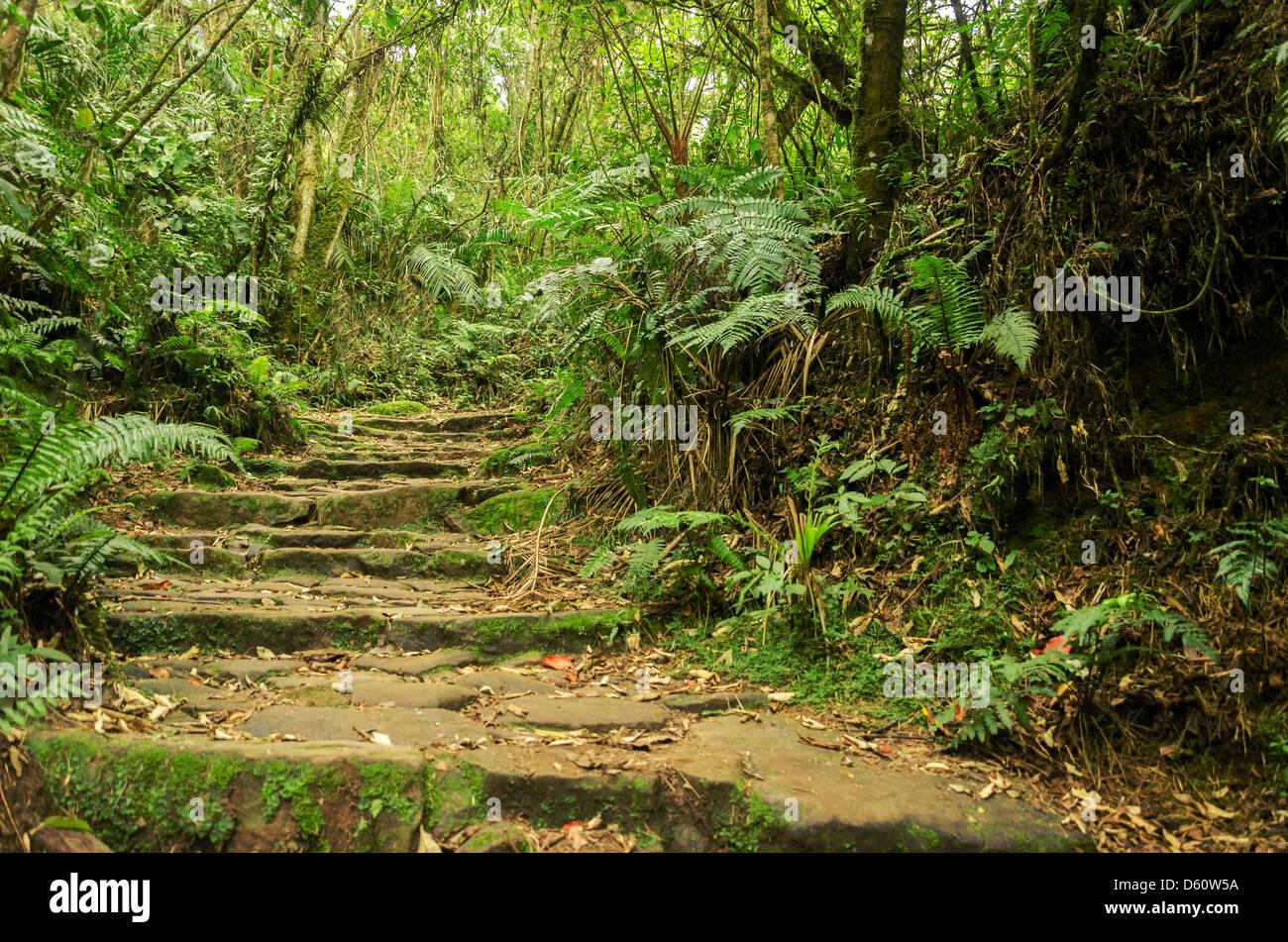 Camino de piedra en la montaña verde bosque nuboso Imagen De Stock