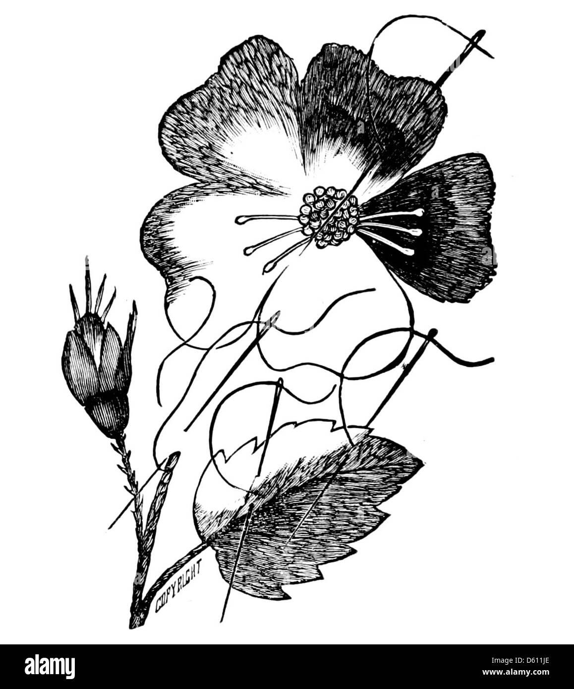 Un libro sobre el arte de la dama bordado en seda, con patrones de ...