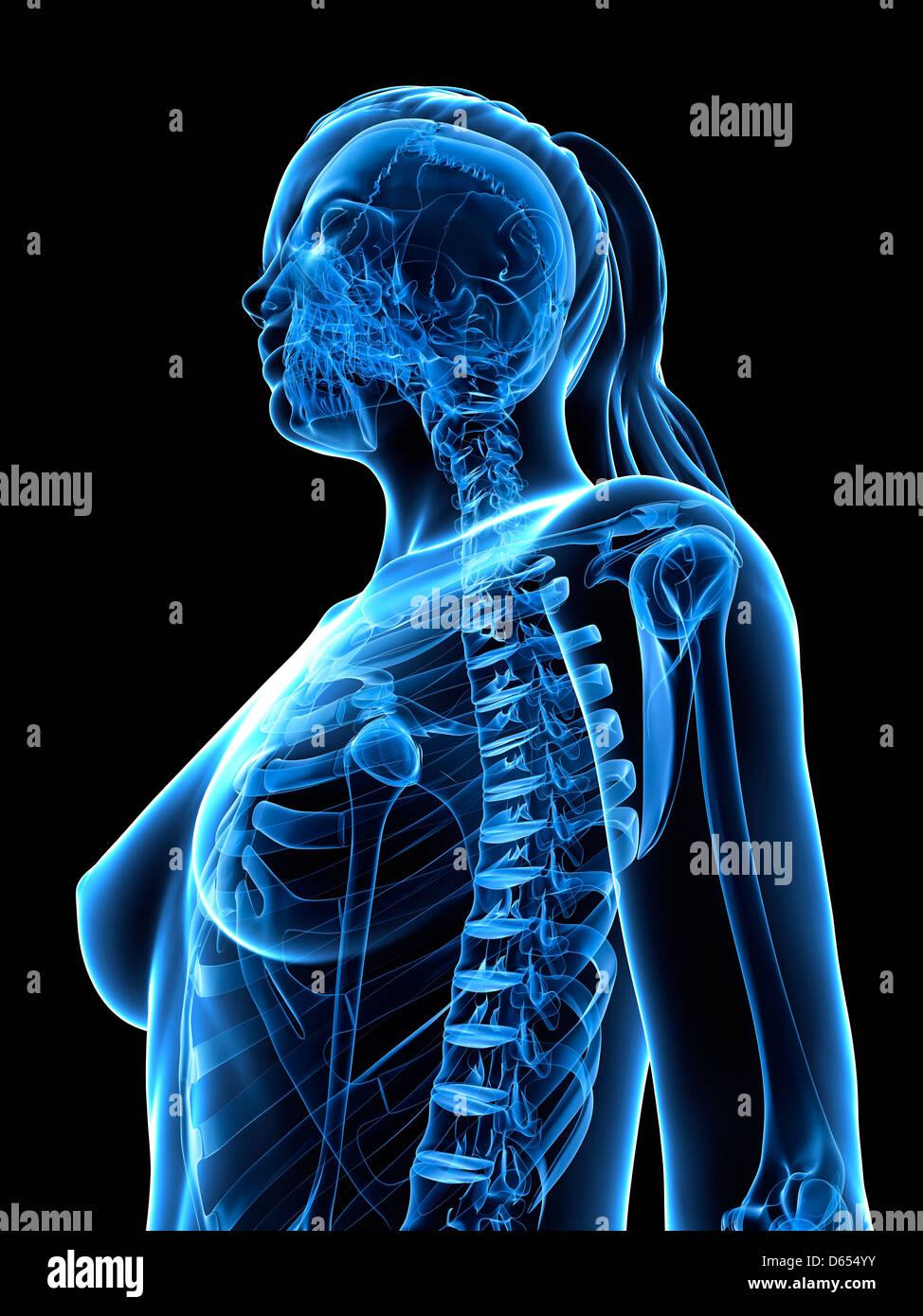 En la parte superior del cuerpo femenino, las ilustraciones Imagen De Stock