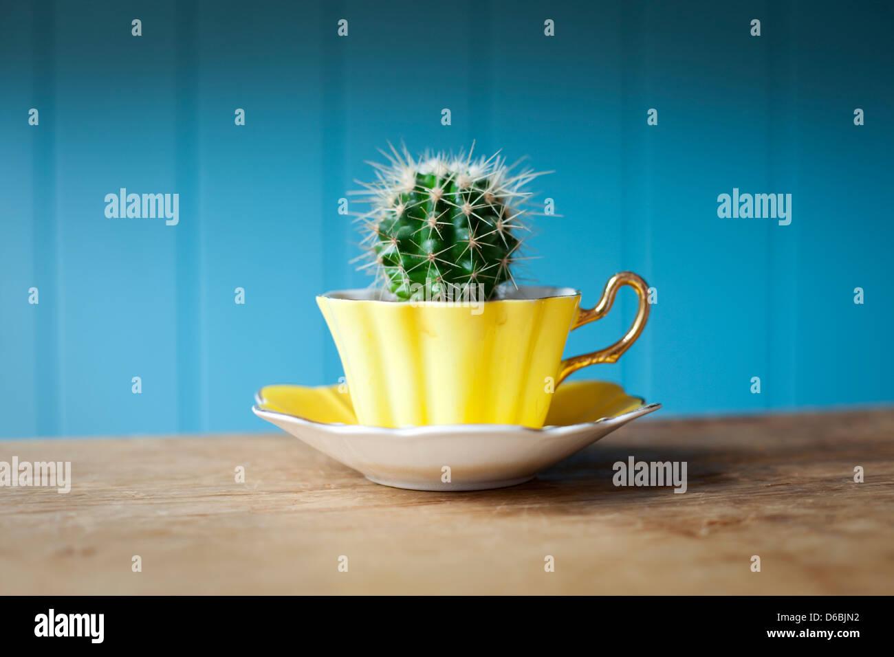 Cactus crecen en vaso en el escritorio Imagen De Stock