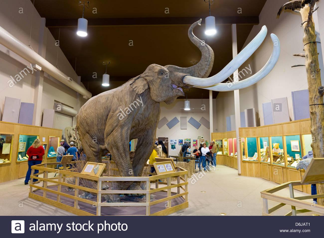 Wooly Mammoth, el Mamut de sitio (sitio paleontológico), Hot Springs, Dakota del Sur, EE.UU. Imagen De Stock