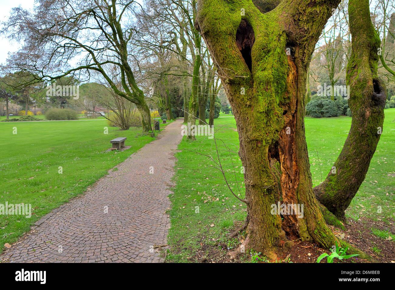 Viejo tronco de árbol cubierto de musgo verde y estrecho pasillo entre prados verdes en parque botánico Imagen De Stock