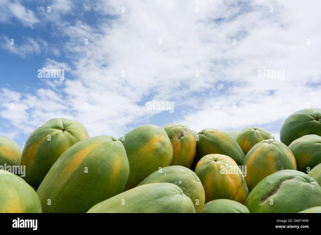Papaya y cielo azul... Foto de stock