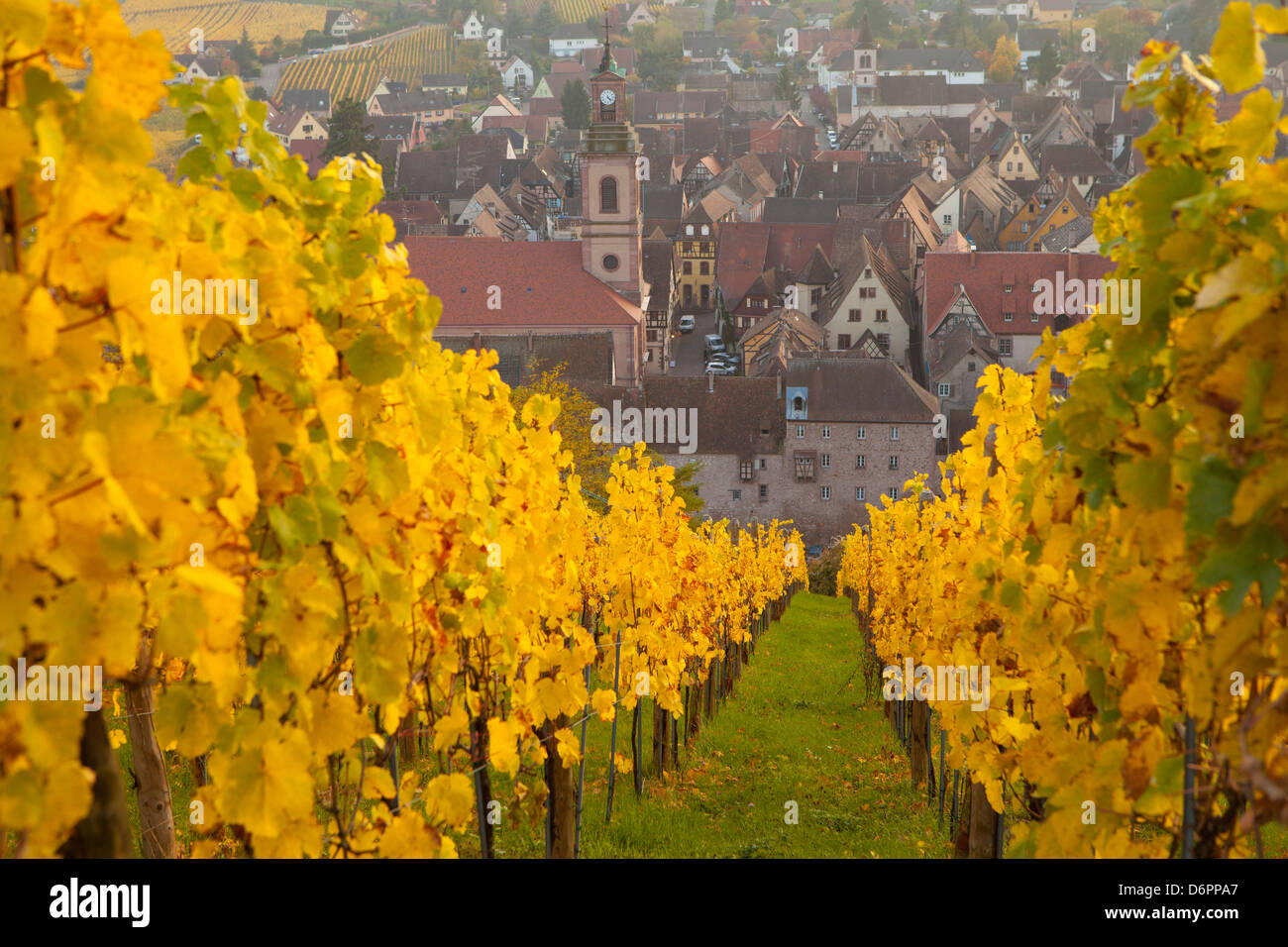 Vista de Riquewhir y viñedos en otoño, Riquewihr, Alsacia, Francia, Europa Foto de stock