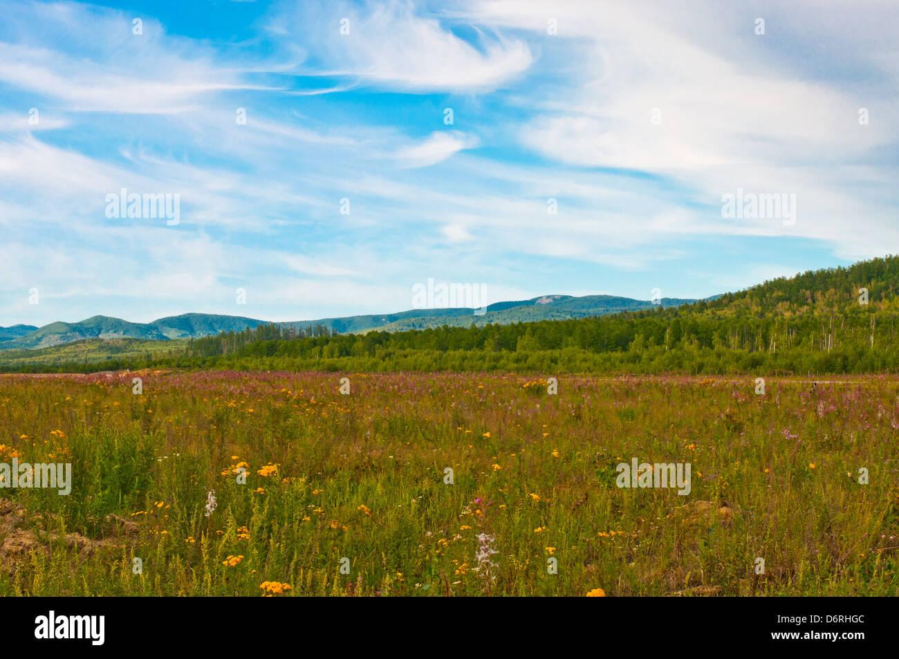 Sabor meadow en Khabarovskiy Kray, Bogorodskoe Village, en el Lejano Oriente de Rusia. Imagen De Stock